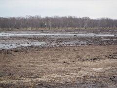野付半島・ナラワラ。 数年前に来た時よりも、景観が寂しくなっている。 浸食は進んでいるんですね。