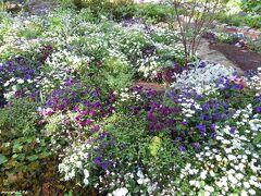 港の見える丘公園 フランス山の花壇