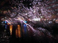 夜の大岡川、野毛界隈に近づきますとあちこちでライトアップされている桜が見られます。