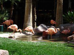 4/27(土)2日目、11時にホテルを出発! フラミンゴホテルを通り抜ける途中で、フラミンゴやお庭をちょっと拝見。