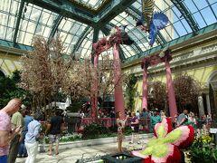 お楽しみの植物園は、季節でテーマが決まっていて、今は春だから「JAPAN」!