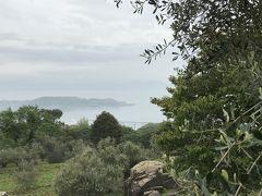 レストランより少し走れば丘の上には、オリーブ園が有り、瀬戸内海の穏やかな海と小島が見えます。