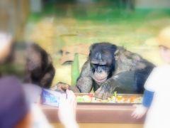 旭川市旭山動物園 ちんぱんじー館