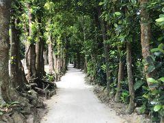 沖縄のパワースポット「フクギ並木」へ行きました。  我ら夫婦は初めて、I氏夫婦は二度目とのこと。 I氏のお陰で「無料駐車場」に停めることができました。  この日は「牛車」はお休みの様で・・・。 石垣島のような体験はできませんでした。  木漏れ日を浴びながらの樹間の散歩は心が癒されます。 植物たちが放つエネルギーのようなものを感じられる通りです。  進路を示す標識に従って歩みを進めます。 所々にカフェやショップがありますが、溶け込んでいます。  帰りは海岸側を歩きました。 直に射す日差しにたじろいながらも「この時を」楽しみます。  私には一切の霊感はありませんが、「やすらぐ」空間でした。