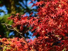 町中心部の西にある大きな公園では、紅葉した楓がありました。 そういえばことちらは秋なんですよね。苦笑