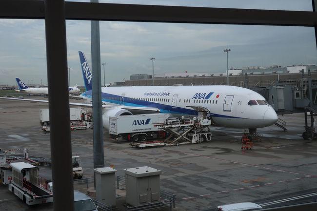 ミュンヘンから羽田まで連れて帰ってくれたB787。結構、混んでおり、もっと大きな飛行機を飛ばすべきではと思います