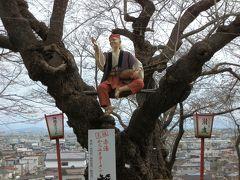 花咲かじいさんが恨めしい。辺りのソメイヨシノは一輪も咲いていません。しかし、置賜さくら回廊のさくらまつりは始まっています。