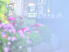 色とりどりの綺麗なバラの花が一斉に咲き広がる、早朝の誰もいない静寂な空間の中に一番列車がやって来る都電荒川線の沿線風景・・・ 沿線に咲き広がる色とりどりの綺麗なバラの花と一緒に、都電荒川線の路面電車を一枚パチリ☆