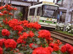 さて、町屋駅前停留場までやって来ました このあたりにも色とりどりの綺麗なバラの花が沿線を彩る素敵な色彩風景が広がっていましたね~