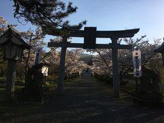 寿都まで来たついでに寿都神社へ。 さくらが満開です!