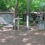 場所は円山公園の「円山原始林」  円山公園の一帯は、動物園や野球場、北海道神宮などもある広大な緑地。 その一画の円山公園は背後に円山を控え、豊かな原生林に囲まれている。 円山は標高225mの低山で、地元の幼稚園の遠足でも使われるくらいの優しく手頃な山だ。