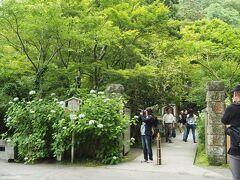 北鎌倉 明月院 正面入り口  鎌倉の「紫陽花寺」として人気の明月院。 紫陽花の開花時期は例年5月下旬~6月下旬ですが、最盛期には半端でない多くの人が訪れます。