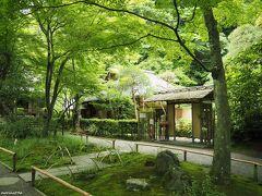 北鎌倉 明月院 茶室・月笑軒の前の新緑  この日は曇り空でしたが、このくらいの方が新緑がきれいに撮れるかも。