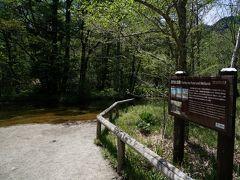 田代池に到着。  池と言うには浅いなと思いましたが、看板に理由が書いてありました。  枯れ木や流入した土砂で埋まり、100年前に最深5mだったのがほとんど埋まってしまったそうで。