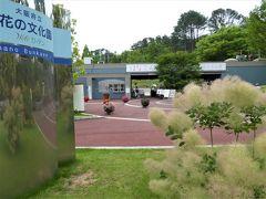 大阪府立「花の文化園」  月曜日=休園  9:30~17:00  大人540円  中学生以下 無料   スモークツリーが見えますね。