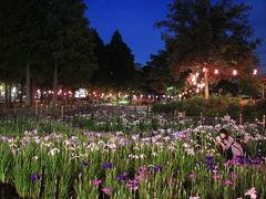 しょうぶ沼公園では、5月24日(金曜日)から6月中旬(予定)まで、