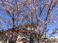 西福寺やあすか緑地を見た後、JR王子駅まで歩いて解散しました。