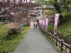 一応桜祭りの最中ですが桜はどうかな~
