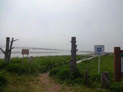 そして春国岱を歩き始めます。  春国岱は「しゅんくにたい」という重箱読みをする砂州で、長さ約8km、約1.3km、面積約596haの大きさを誇ります。  重要な湿地であることが認められ、ラムサール条約第9回締約国会議でこの風蓮湖と春国岱はラムサール条約湿地の仲間入りをしました。