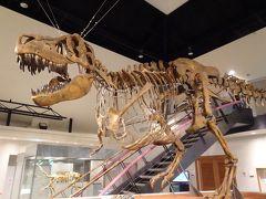 別館に移動し「モンゴルの恐竜たち」の展示室へ。 ライブシアターでも登場したタルボサウルス。 フロアを超える高さで迫力あり!