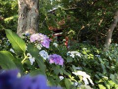 紫陽花は梅雨の季節ならどこでも咲いているイメージがあり、神社寺などを中心に名所も多いと思います。 家の近辺では千葉県の松戸市にある本土寺などが代表的です。