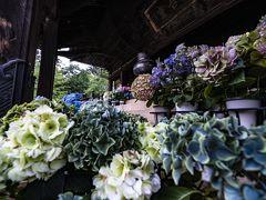 そして成田市の宗吾霊堂にも行ってきました。 紫陽花がカラフルで本堂の前の盆栽の配置にも感心しました。 そして全体的の雰囲気の良い寺でもあり、本来では満足するところですが。 どうも他のところと似てるなという感じがあり、それ以降わざわざ紫陽花目当ての旅はお休みになりました。