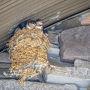 千葉君津 : ドリプレ・ローズガーデンで自由すぎる猫に癒される