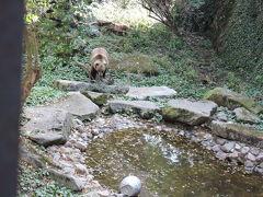 チェスキークロムロフに行きます。 お堀に熊がいました。