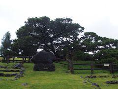 久米の五枝の松
