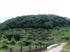 吉次峠から見た半高山。 やはり「西郷どん」の関係でしょうか、付近はきれいに整備されていました。