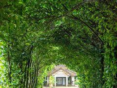 行ってみたかった場所、それは備瀬のフクギ並木です。 沖縄にはこれが6回目だったんですが、ここを訪れるのは初めてでした!