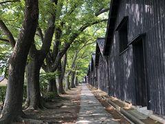 更に進むと有名な欅並木の道へ出ました