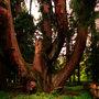 越後の護湯「蓬平温泉」で龍神参り。日本一巨杉の三川「将軍杉」。