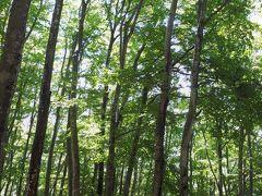 真っ直ぐと生えるブナの木。 360度この景色に包まれます。