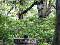夫婦杉 2本の木が枝で融合しています。 まるで手をつないでいるかのようなので、夫婦杉と呼ばれているようです(^-^)