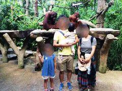 この日は、夕方からシンガポール動物園にも行きました。有名なオラウータンと一緒に写真撮影もしました。