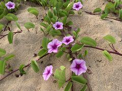 パイアビーチ