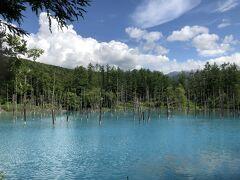 美瑛(白金) 青い池