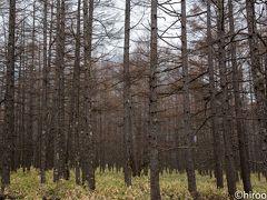 戦場ヶ原の林
