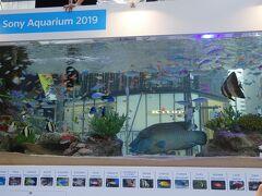 ソニー・スクエア(熱帯魚の水槽)(ソニー・アクアリウム) この後、JRで有楽町駅から飯田橋駅まで行きます。