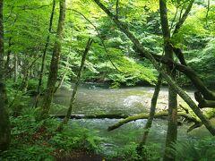 ここから流れに沿って散策開始です! 虫よけスプレーもってくればよかったなぁ。