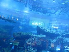 ドバイ水族館 & 水中動物園