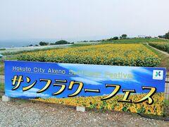 ハイジの村のすぐ前にある、明野ひまわり畑を訪れました。