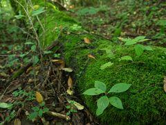 男池湧水群に移動です ここは大分県 原生林内に湧き水が湧いてます 昼間でも苔むす森林