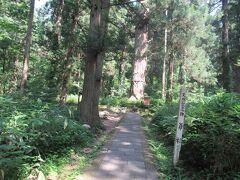 天然記念物。爺杉(じじすぎ)。 樹齢1000年と言われています。
