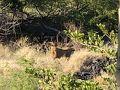 ラナイからは、野ヤギが見放題。 野ヤギ限定ですが、サバンナビュー^_^ オーランドのアニマルキングダムジャンボハウスに、また行きたいです。