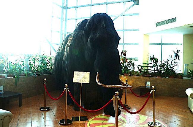 まだヤクーツクで最も有名な肝心な物が見れていません、、それはマンモス。ヤクーツクではマンモス博物館かヤロスラフスキーに展示されていますが、どちらも本日月曜日は休館で、見る事ができません。がっかりです。PolarStarホテルに戻るとガイドが見せたいものがあると言います。そのまま2階に行くと、そこにマンモスがいるではありませんか!これは感動の対面です。
