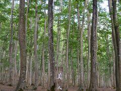 清津峡から30分ぐらいで次の目的地、美人林に到着。  ネーミングが好きで、いつか来てみたかった。