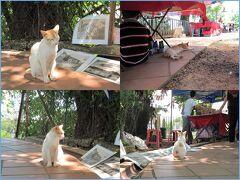<マラッカ> サンチャゴ砦(ファモサ)の手前あたりにいた2匹の猫。