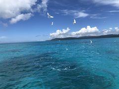 次は西の浜沖から新城島へ移動してお昼です。  スカシテンジクダイなどの小魚を狙って鳥がダイブしています。 迫力ある~。